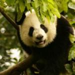 Australien: Urlaub zwischen Riff und Regenwald