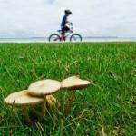 Kapstadt per Fahrrad erkunden – Cape Grace jetzt mit geführten Radtouren (2010-04-19)