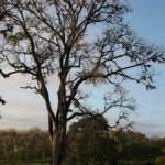 Singita Grumeti Reserve offeriert Safaris entlang der Wildwanderroute