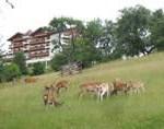 Hotel Kastenholz in der Eifel: Erstes F.X. Mayr-Gesundheitszentrum in Rheinland-Pfalz eröffnet