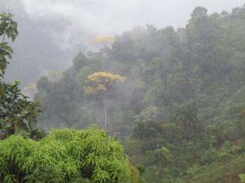Bloß nicht den Kopf verlieren:  17-tägige Studiosus-Reise zu den Naturwundern im Osten Malaysias