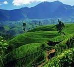 Tischler Reisen: Sri Lanka in Style