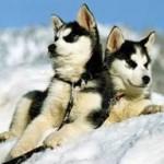 Hunds-Tage im Tannheimer Tal