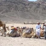 TUI: Viele Tunesien-Urlauber wieder zurück