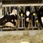 """Katalog 2011 """"Roter Hahn – Urlaub auf dem Bauernhof in Südtirol"""""""