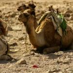 TUI verlagert Flugkapazitäten von Ägypten auf die Kanaren und nach Antalya