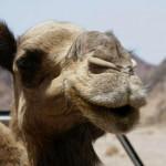 Tunesien und Ägypten: Es geht wieder los