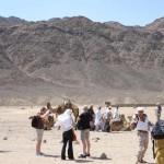 Studiosus führt erst ab Mitte April wieder Reisen nach Ägypten durch – Massenveranstalter sind schneller