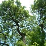 Kolumbien lässt ITB-Besucher Bäume pflanzen