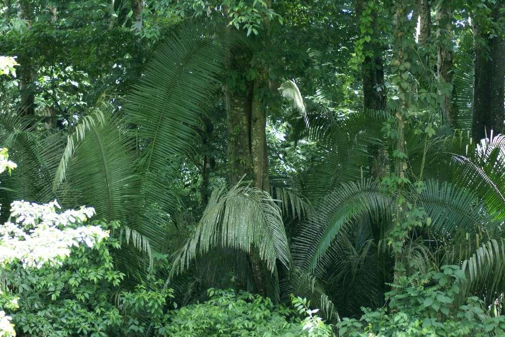 Nachhaltigkeitsveranstaltungen der Rainforest Alliance auf der ITB