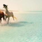 Abu Dhabi bei Tischler-Reisen: 360 Sonnentage pro Jahr und endlose Strände
