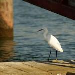Zur Vogelbeobachtung ins Donaudelta