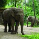 Altenheim für Elefanten: Tierischer Streit im Burgers' Zoo