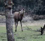 Spanien: Der Herzschlag des Waldes – Hirschbrunft im Naturpark Alcornocales