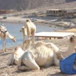 Marrakesch, Moskau oder Madrid mit eigenem Scout: Marco Polo erweitert Städtereisen-Programm für Individualisten
