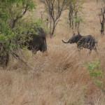 Neue Tansania-Kombination: Safari in der Serengeti, Sonnenbad auf Sansibar