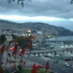 Mit Jahn Reisen zum Blumenfestival nach Madeira