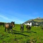 Die Pferderegion Oberbayern – Tirol e.V. bietet urige Almritte an