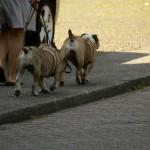 Topservice für VIP-Hunde im Hyatt Düsseldorf