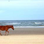 Wilde Mustangs gehen auf Tuchfühlung mit Touristen