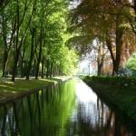 Maritim Hotel Bonn übernimmt Baumpatenschaft