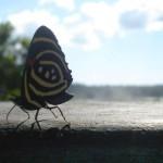 Reisesouvenirs – Verbotene Mitbringsel können teuer werden