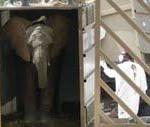 Elefanten an Bord