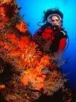 Neue Gratis-Tauchbroschüre zeigt Lanzarotes vielfältige Unterwasserwelten