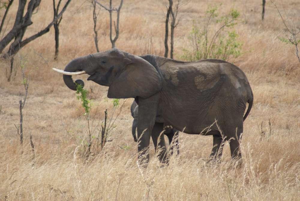COMING SOON….  Neues Camp in Namibia: Hoanib Skeleton Coast