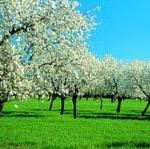 Mandelblüte lässt bei alltours die Nachfrage auf Mallorca kräftig sprießen