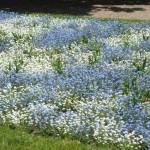 Mit ITS in Europas größten Blumenpark