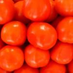 Kartenvorverkauf für die Tomatenschlacht von Buñol