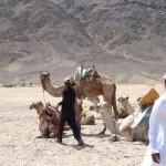 ADAC setzt Reisen und Ausflüge nach Kairo aus