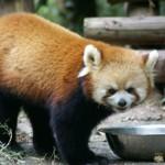 Von den Pandas zur Taklamakan