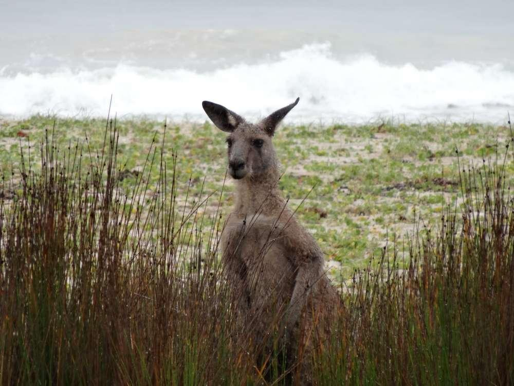 Outback und eine Zugfahrt im Ghan