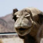 Tourismusziel Arabische Halbinsel boomt – heute und in Zukunft