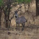 Safari-Camps, die mit der Natur verschmelzen