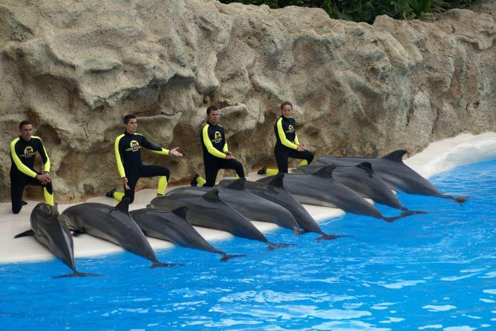 Im Angebot bei Thomas Cook: Delfinquälerei in Delfinarium auf Mallorca