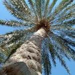 Shangri-La in Abu Dhabi: 2007 eröffnet im Emirat das Shangri-La Hotel Qaryat Al Beri