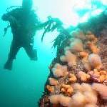 """Mit ROBINSON und der Initiative """"Reef Check"""" Meeresforscher sein"""
