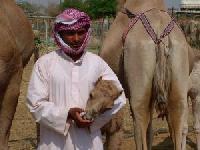 "Neu bei TUI: Rundreise ""Faszinierender Oman"""