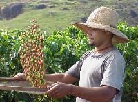El Salvador nutzt Kaffee als neue touristische Attraktion