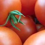 Valencia sieht rot- bei der größten Tomatenschlacht der Welt