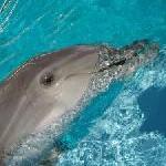 Name für Delfinbaby gesucht