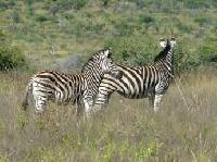 Afrikanisches Flair zwischen Komfort und Wildnis