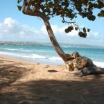 Tobago schützt seine Schätze