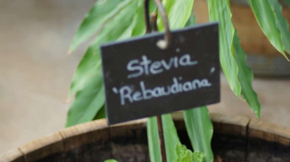 Die Terra Botanica in Angers – Pflanzenerlebnis wie aus einer anderen Welt
