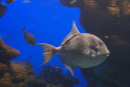 Palma Aquarium auf Mallorca - Staunen zwischen Haien, Fischen und Algen (09013) Foto: ©Carstino Delmonte (2009)