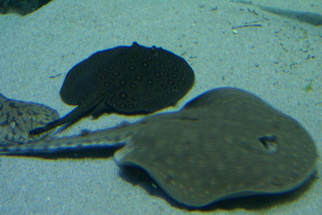 Palma Aquarium auf Mallorca - Staunen zwischen Haien, Fischen und Algen (09082) Foto: ©Carstino Delmonte