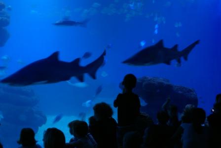 Palma Aquarium auf Mallorca - Staunen zwischen Haien, Fischen und Algen (09101) Foto: ©Carstino Delmonte (2009)